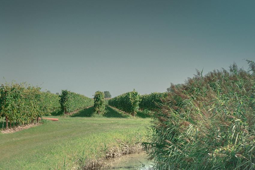 slide-vigne-2